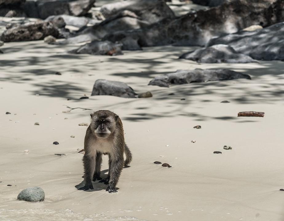 Thailand, Phuket, Koh Phi Phi, Island Tour, Wild Monkey