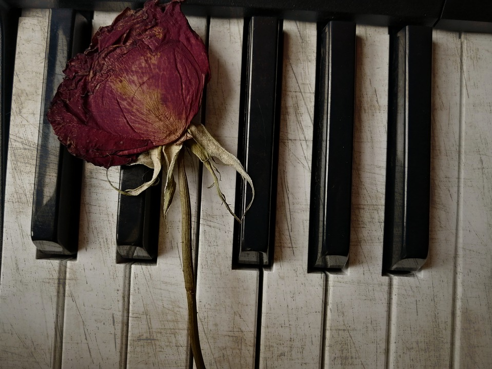Piano, Dried Rose, Music, Rose, Flower, Dried Flower