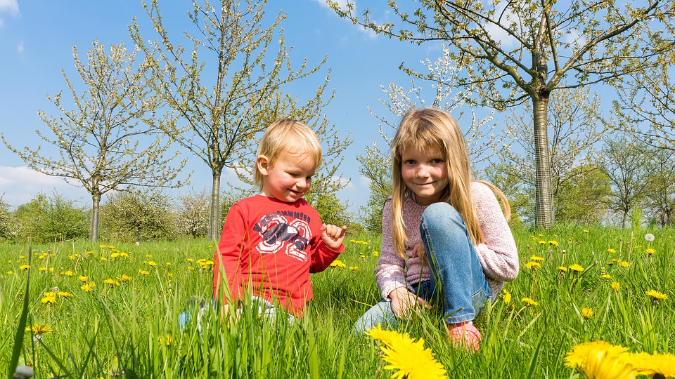 Children, Meadow, Summer, Play, Pick Flowers, Out