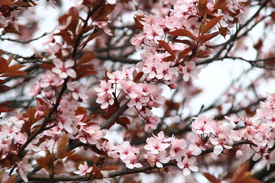 Spring, Picnic, Flowers, Pink, Nature, Plant