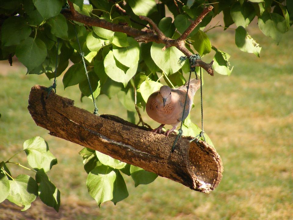 Dove, Birds, Nature, Pidgin, Cratch, Feeder