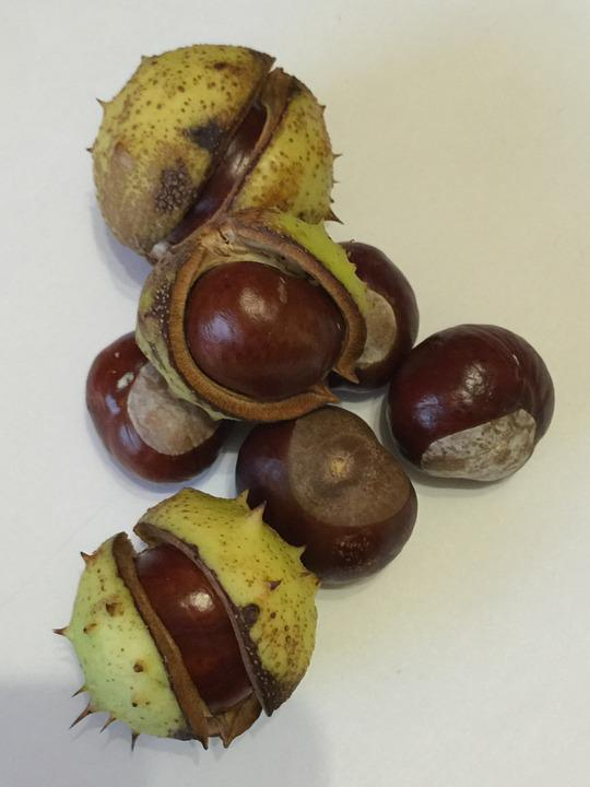 Chestnut, Autumn, Nature, Fruit, Pieksig