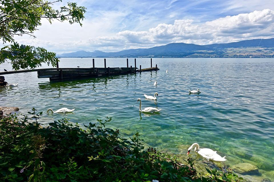 Pier, Tranquil, Swans, Water, Nature, Summer, Sea