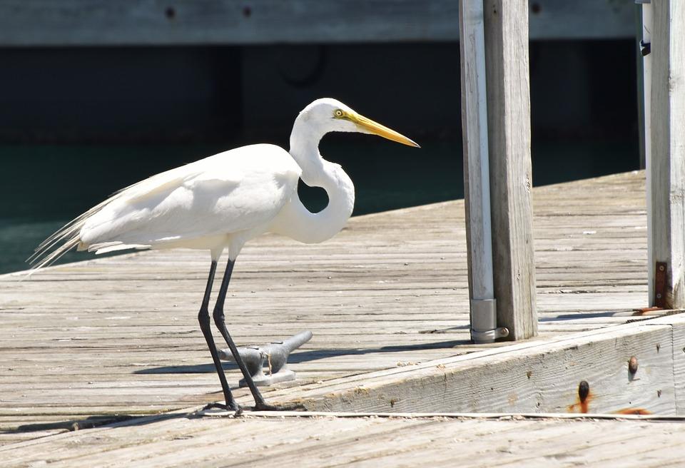Bird, Dock, Pier, Nature, Wildlife, Sea, Ocean, Wild