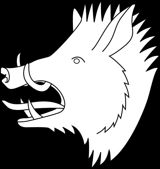Boar, Hog, Pig, Animal, Head, Wildlife, Nature, Swine