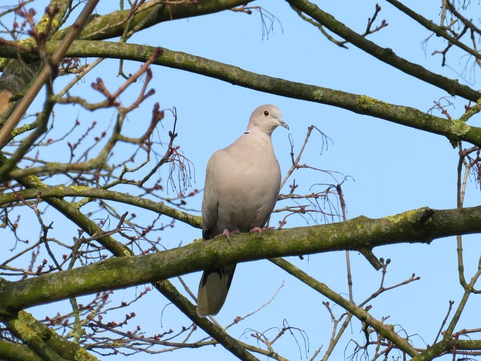 Birds, Nature, Pigeon