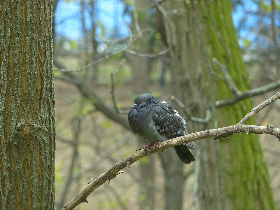 Dove, Pigeon, Branch, Perched, Bird, Animal, Wildlife