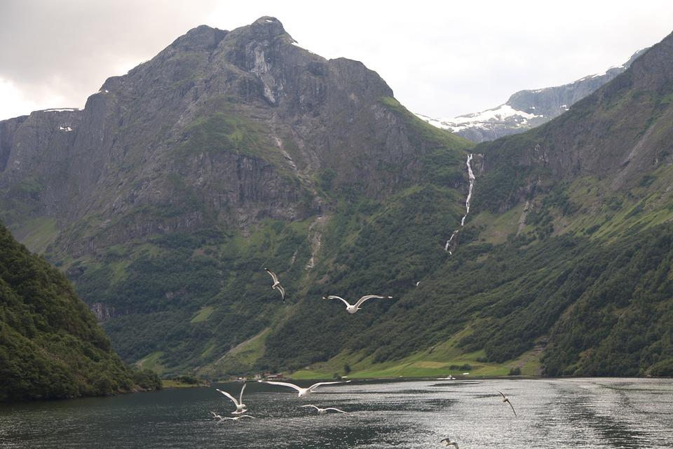 Norway, Fjord, Pigeon, Panorama, Mountain, River, Lake