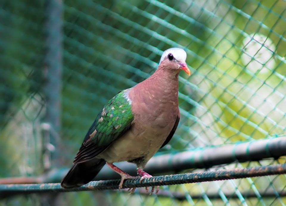 Bird, Nature, Animal, Outdoors, Wildlife, Pigeon