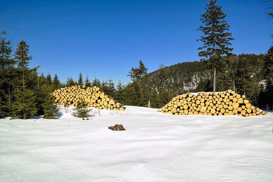 Wood, Forest, Tree, Nature, Trunk, Pile Of Wood, Cut