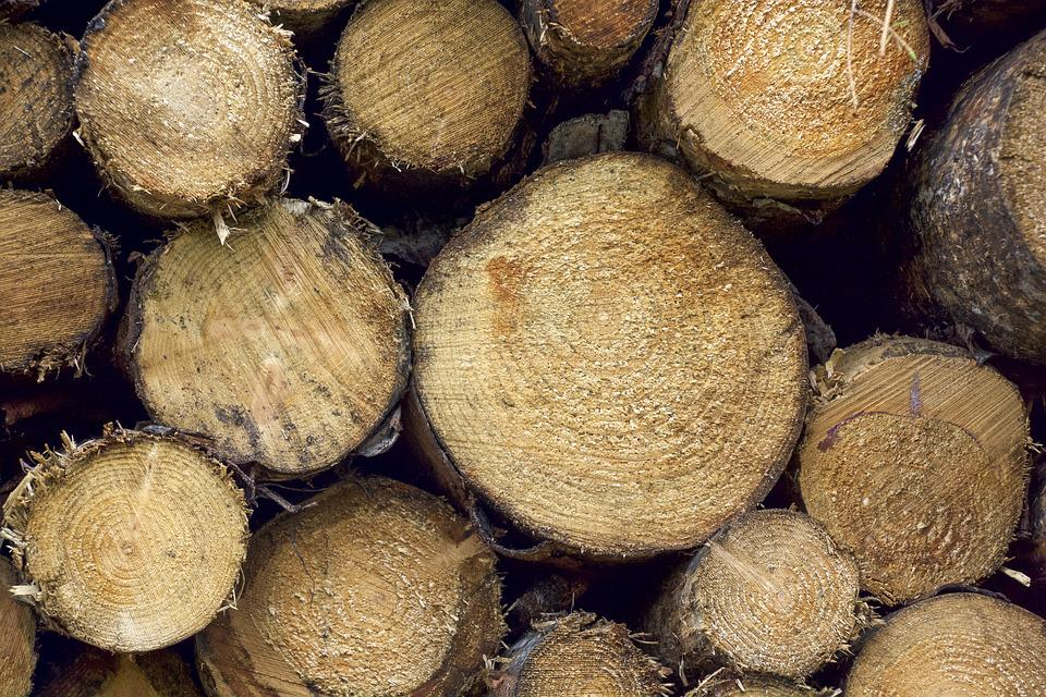 Wood, Logs, Pile, Timber, Outdoors, Natural, Cut