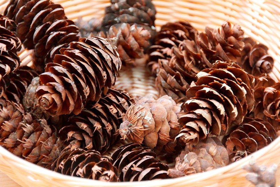 Pine Cone, Tap, Winter, Autumn, Pine Cones, Wintry