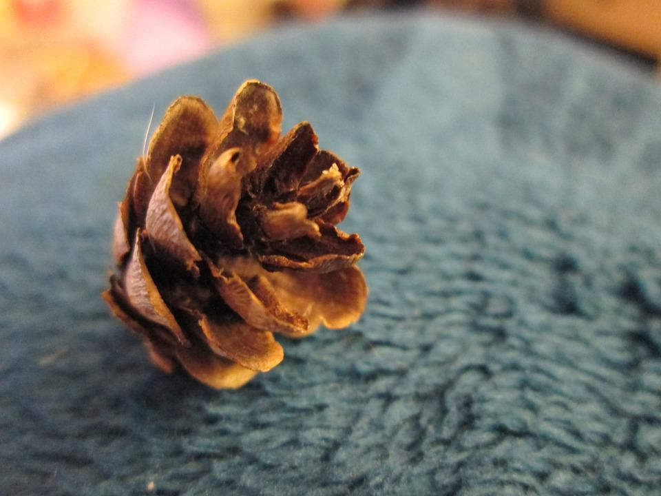 Pine Cone, Small, Brown, Winter