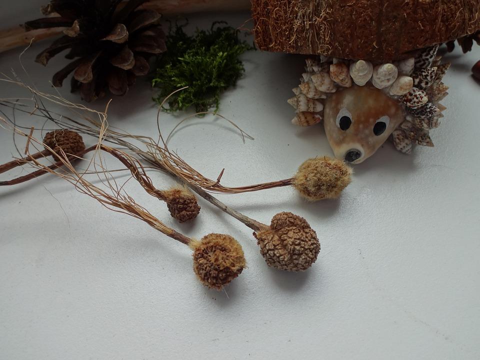 Hedgehog, Pine Cone, Platanus