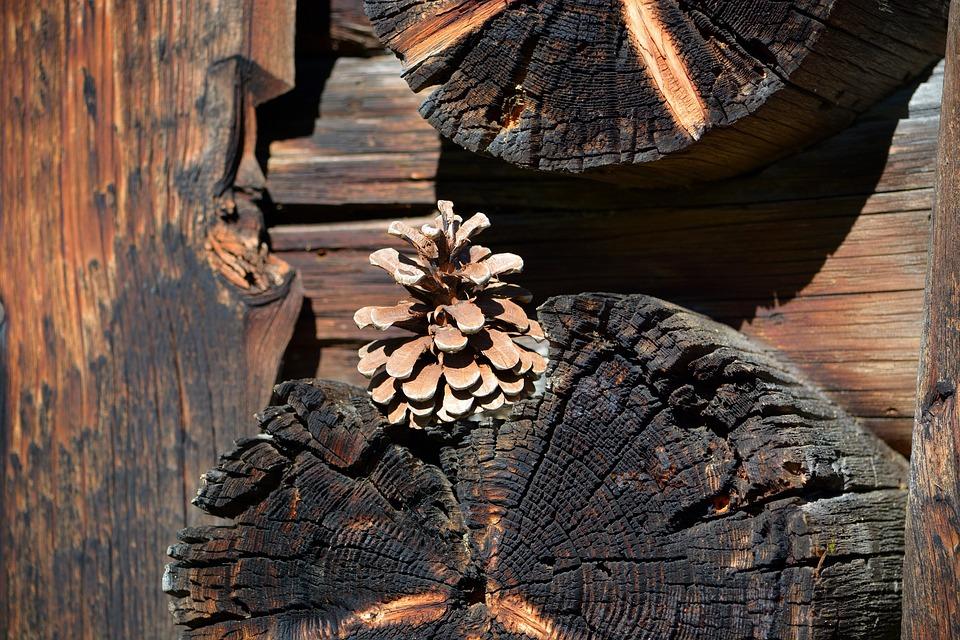 Pine Cones, Wood, Brown