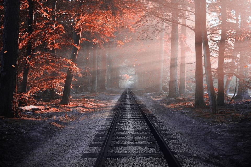 Railway, Forest, Sleepers, Tree, Rails, Pine, Very Nice