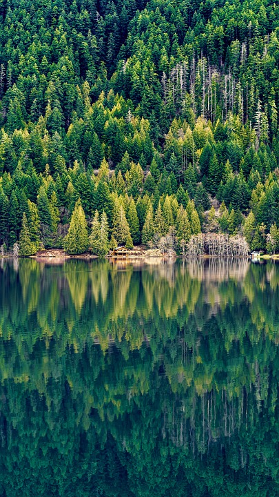 Lake, Reflection, Forest, Pine Forest, Nature, Water
