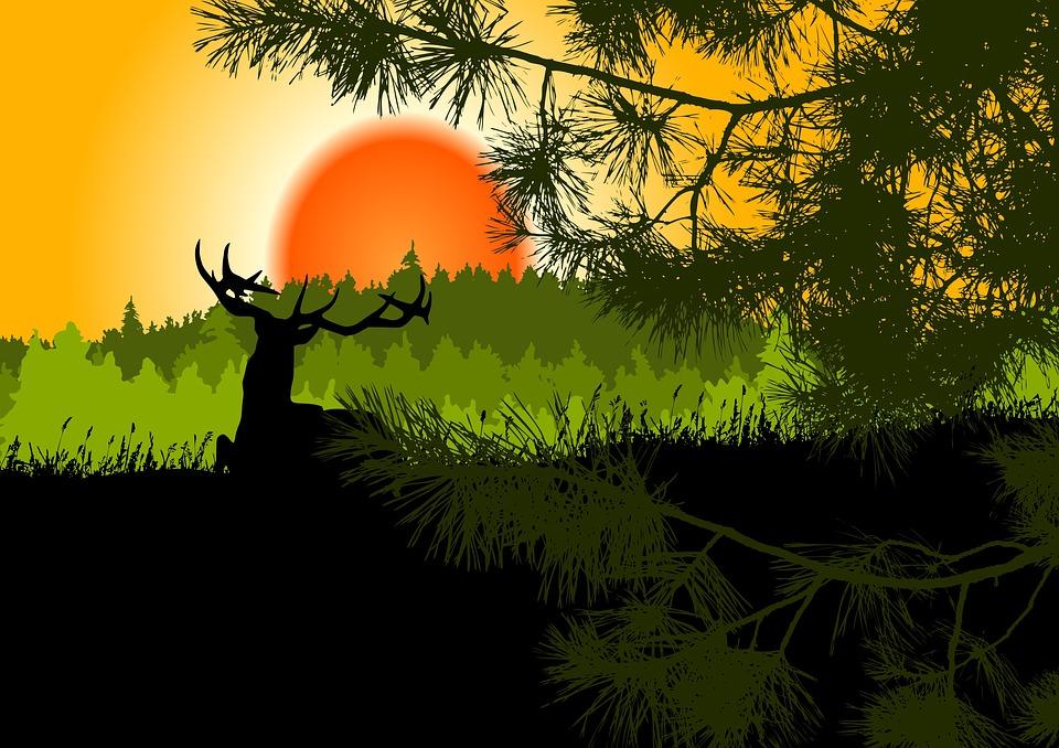 Landscape, Sunset, Fir Forest, Graphic, Hirsch, Pine