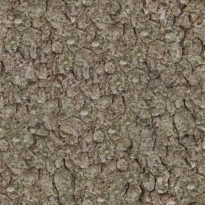 Texture, Seamless, Tileable, Pine, Bark, Nature, Tree