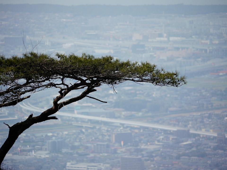 Pine, Views, Wood, Road