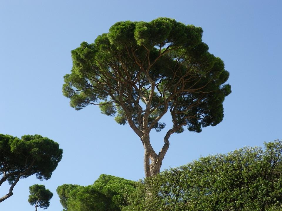 Trees, Pine, Mediterranean, Sky, Rome