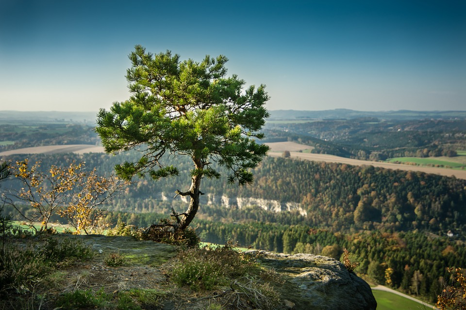Pine, Tree, Alone, Rock, Elbe Sandstone Mountains