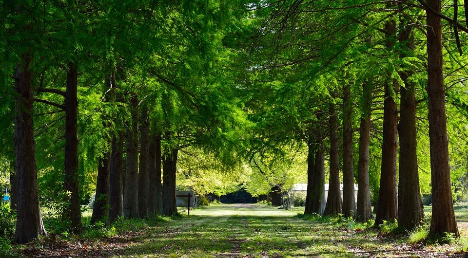 Trail, Landscape, Pine, Nature, Trees