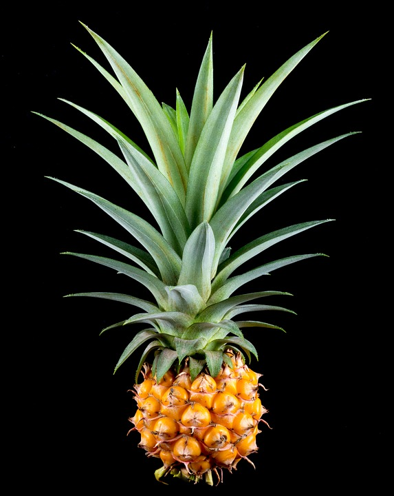 Pineapple, Small Pineapple, Fruit, Tropical, Delicious