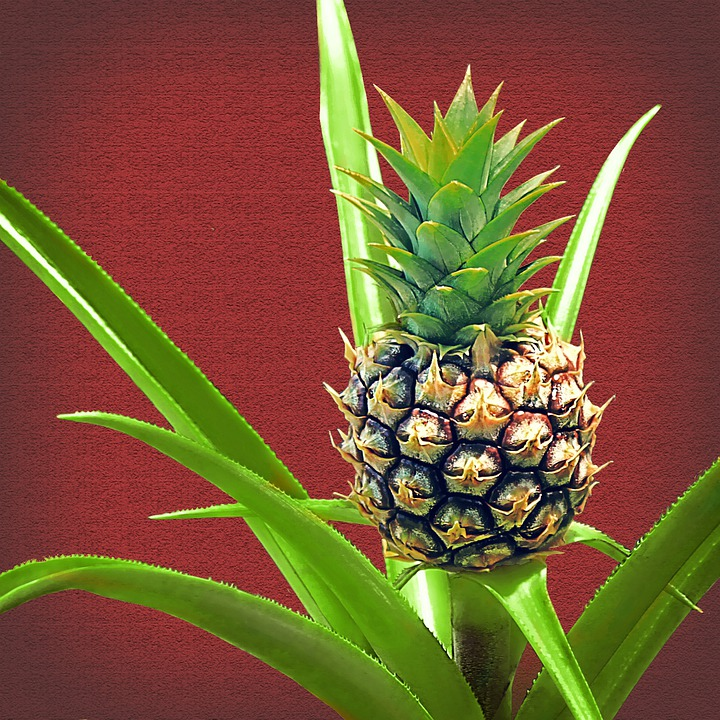 Pineapple, Baby Pineapple, Plant, Fruit, Green, Tropic