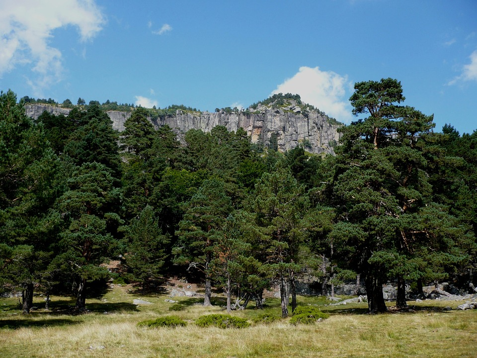 Pinewood, Mountain, Landscape, Tree, Forest, Pine