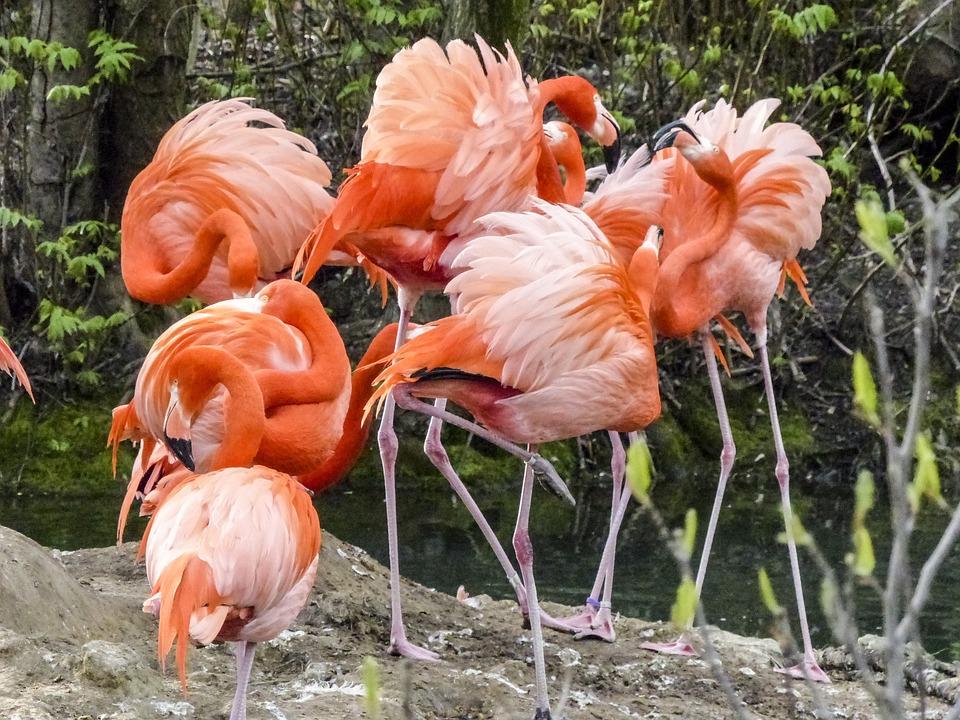 Pink, Flamingo, Bird, Nature, Animal, Wildlife, Exotic