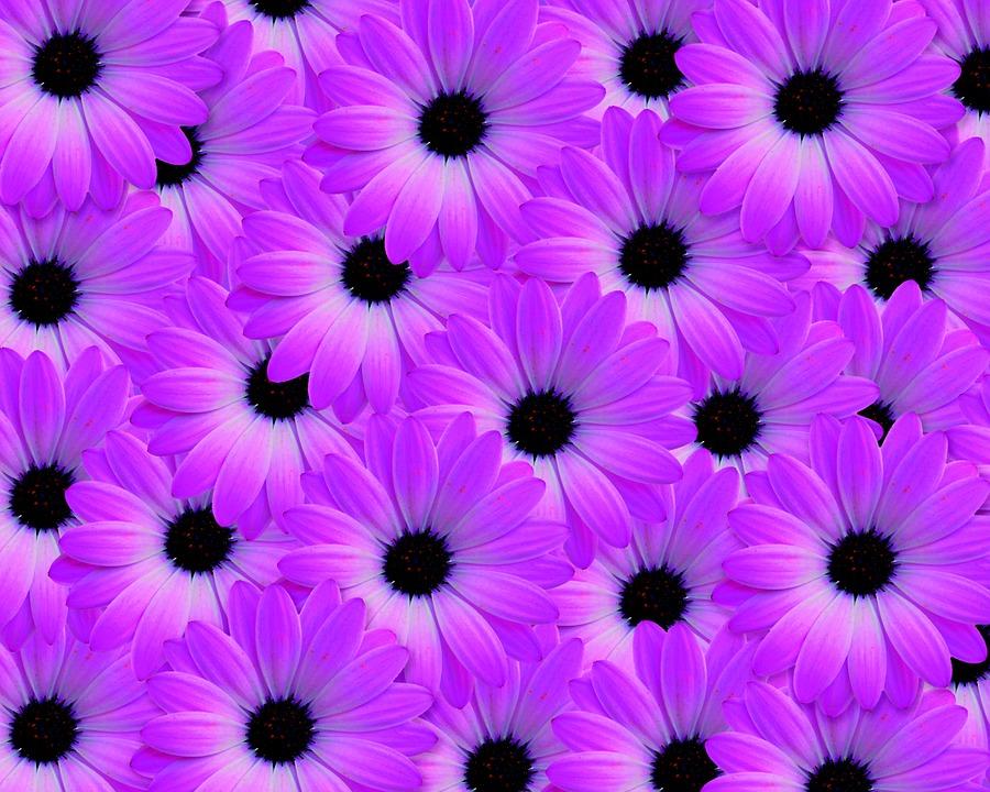 Background, Flower, Nature, Pink Background