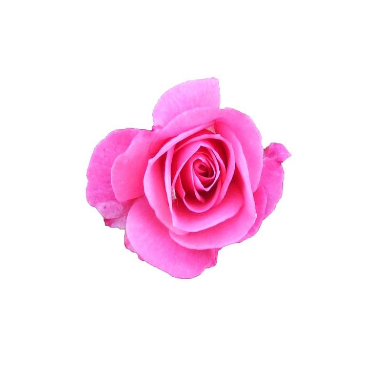 Rose, Pink, Blossom, Bloom, Motivational Cards, Thorns