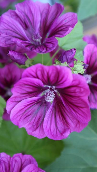 Flower, Purple, Pink, Blossom, Bloom, Purple Flower