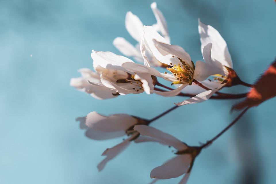 Flower, Spring, Blossom, Nature, White, Pink, Bloom