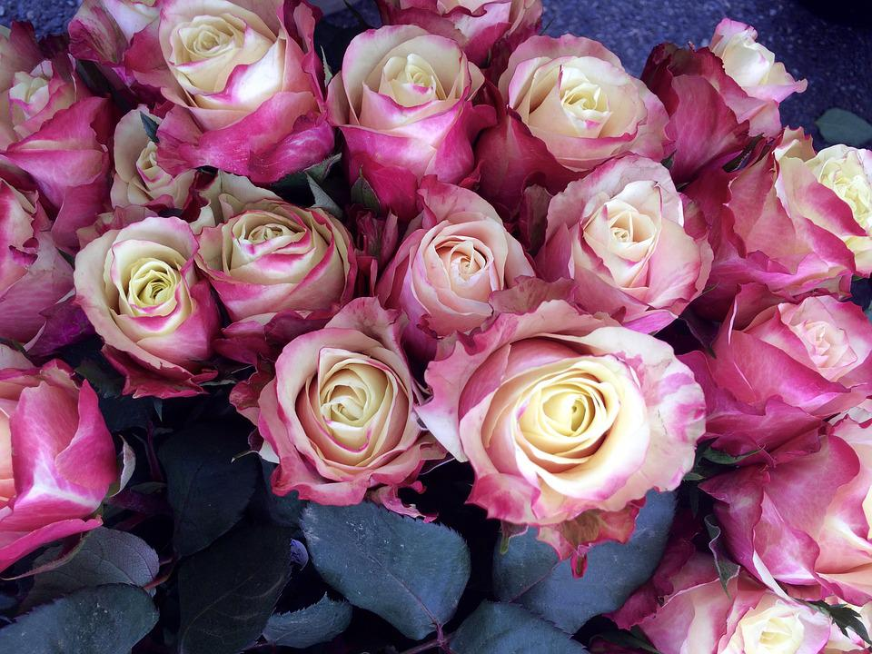 Roses, Bouquet, Flowers, Pink, Congratulations