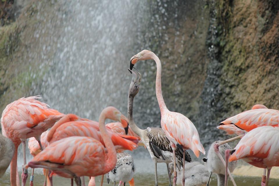 Pink Flemish, Food, Baby, Animals, Animal, Family