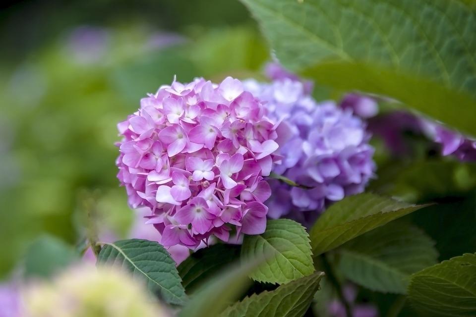 Nature, Pink Flower, Pink, Flowers, Spring, Bloom