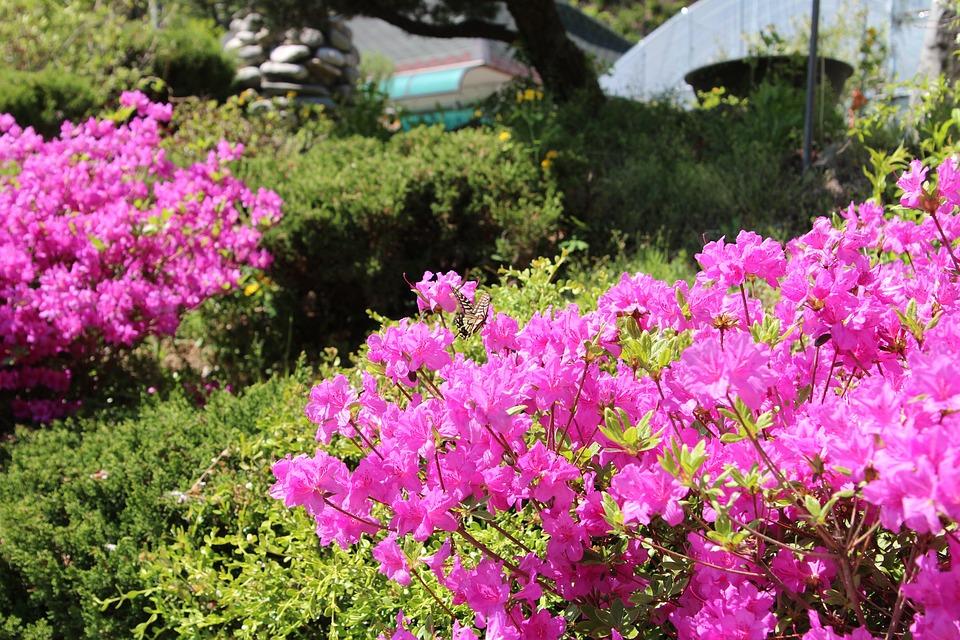 Pink, Flower, Nature, Flowers, Plants