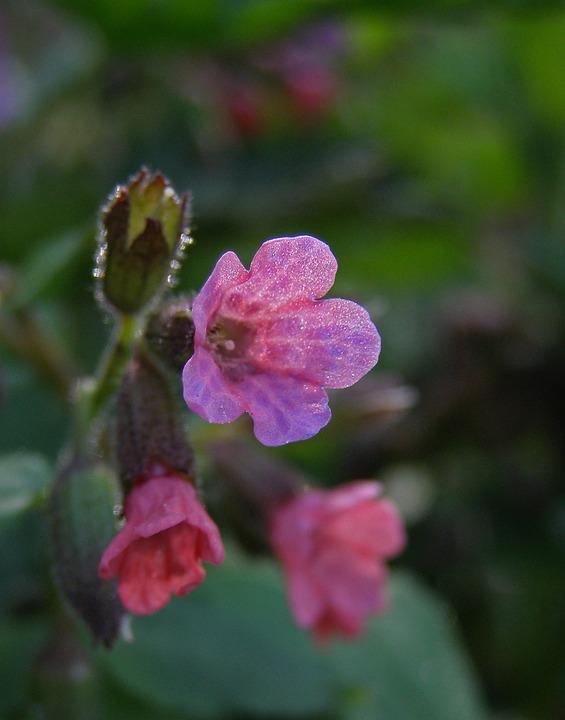 Spring, Flower Field, Pink Flower