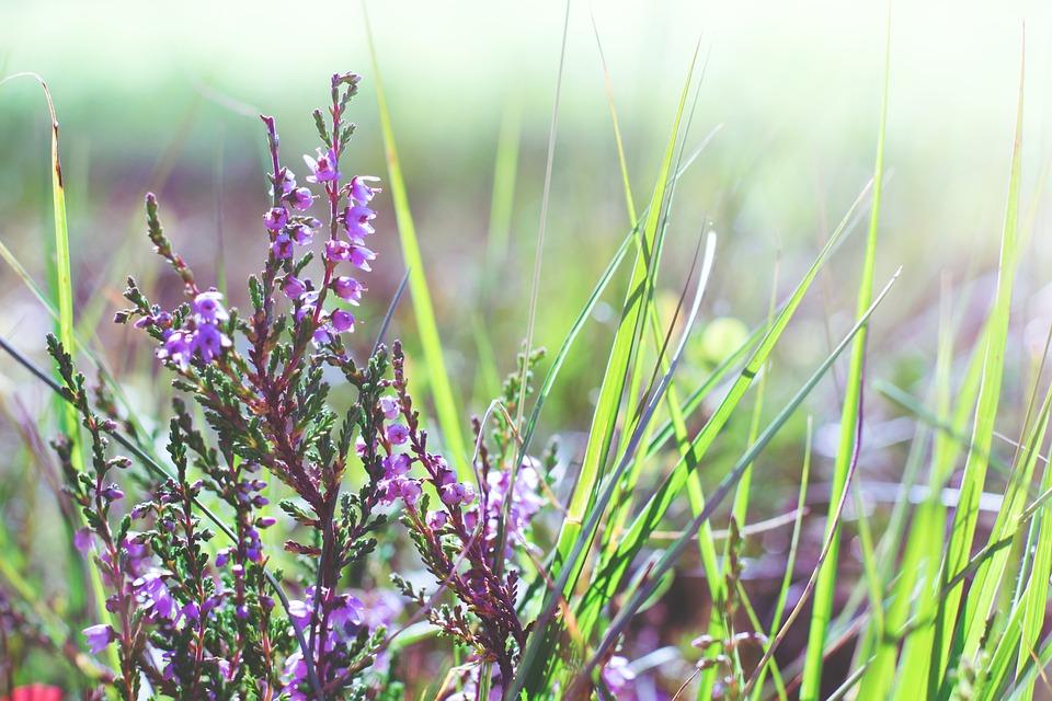 Flowers, Tender, Flora, Flower, Meadow, Nature, Pink