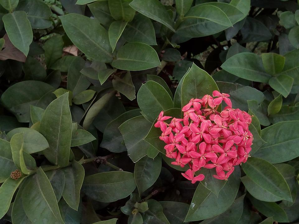 Free Photo Pink Flowers Flower Pin Bush Red Flowers Flowers Max Pixel