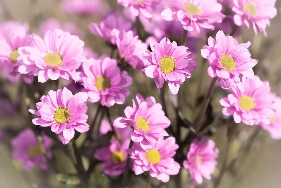 Flowers, Pink, Pink Flowers, Nature, Flora, Cut Flowers
