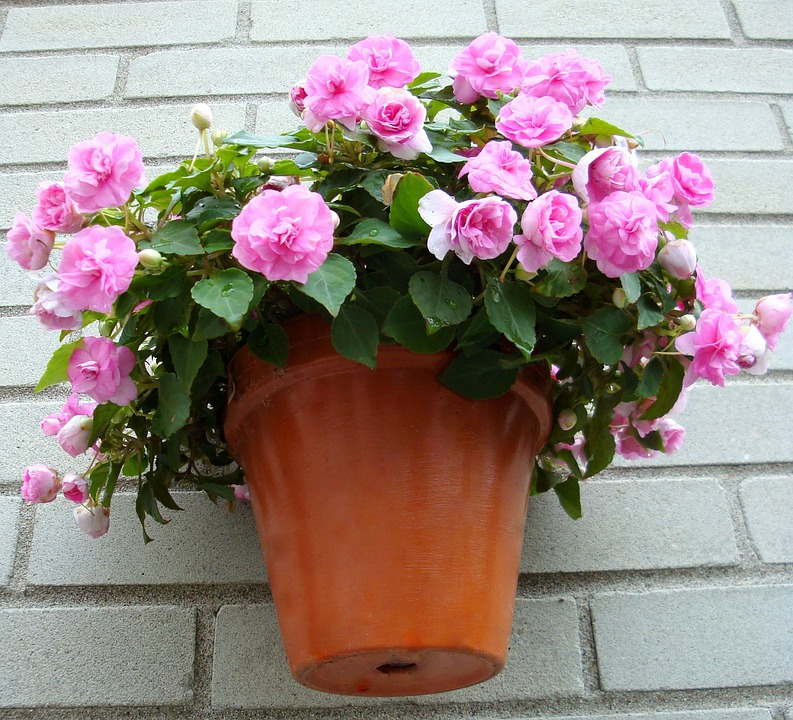 Flowers, Garden, Pink