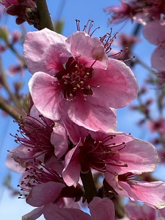 Flowers, Pink, Pink Flowers, Bloom, Blossom, Petals