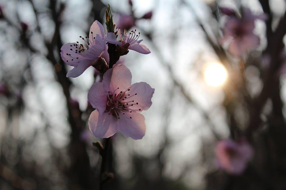 Flowers, Winter, Sun, Cold, Pink Flowers, Sunset