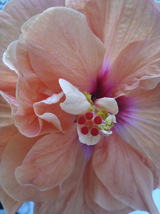 Flower, Gerbera, Flora, Botanica, Nature, Pink, Petals