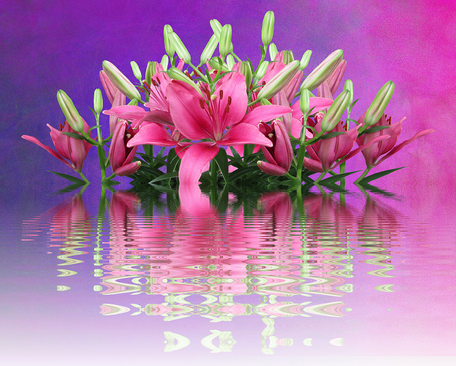 Lilies, Pink Lilies, Nature, Lily Family, Pink Flower