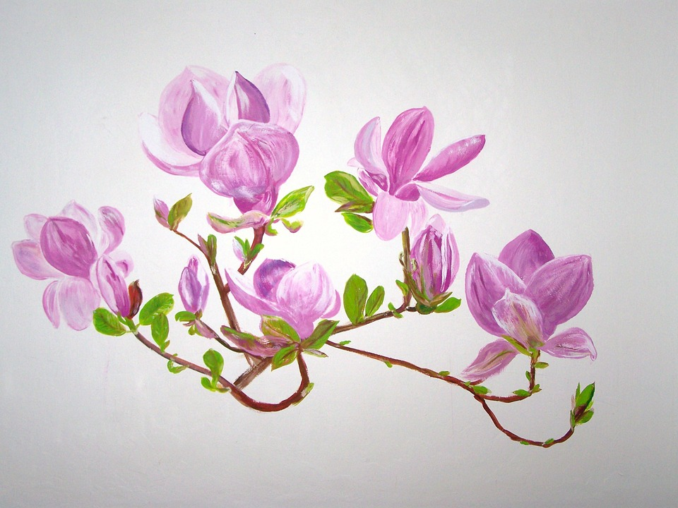 Magnolia, Flowers, Pink