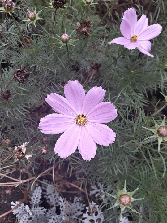 Flower, Nature, Petals, Pink, Botany, Plant